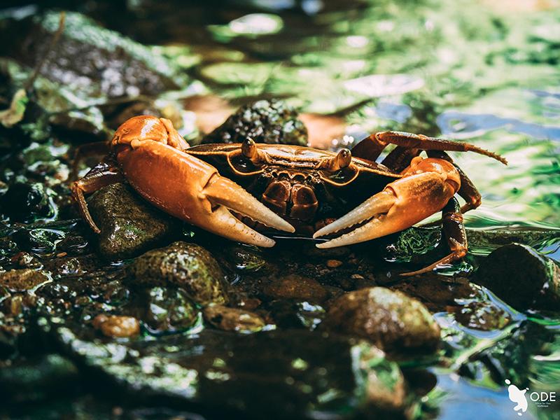 Les zones humides sont pour les espèces animales :